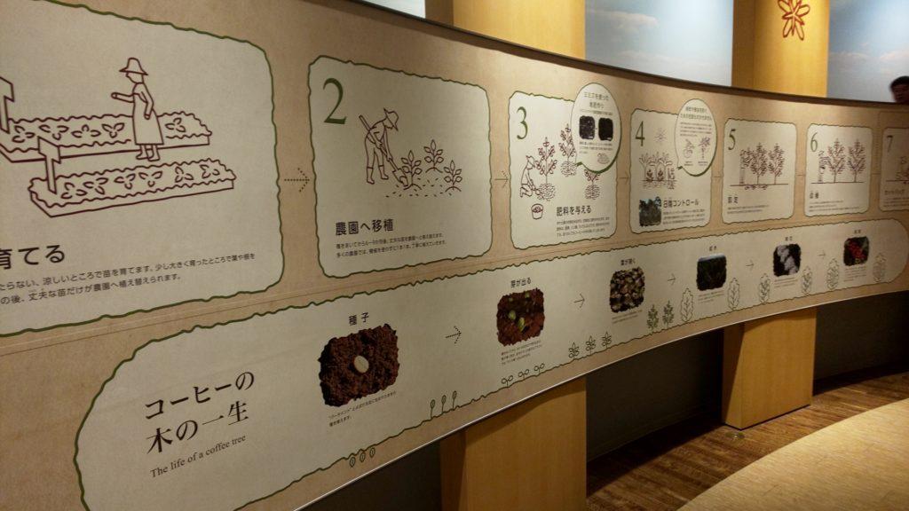 UCCコーヒー博物館のコーヒーの栽培について
